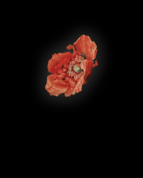 Rob and Nick Carter - RN941, Poppy I after Abraham Mignon, 2013 · © Copyright 2019