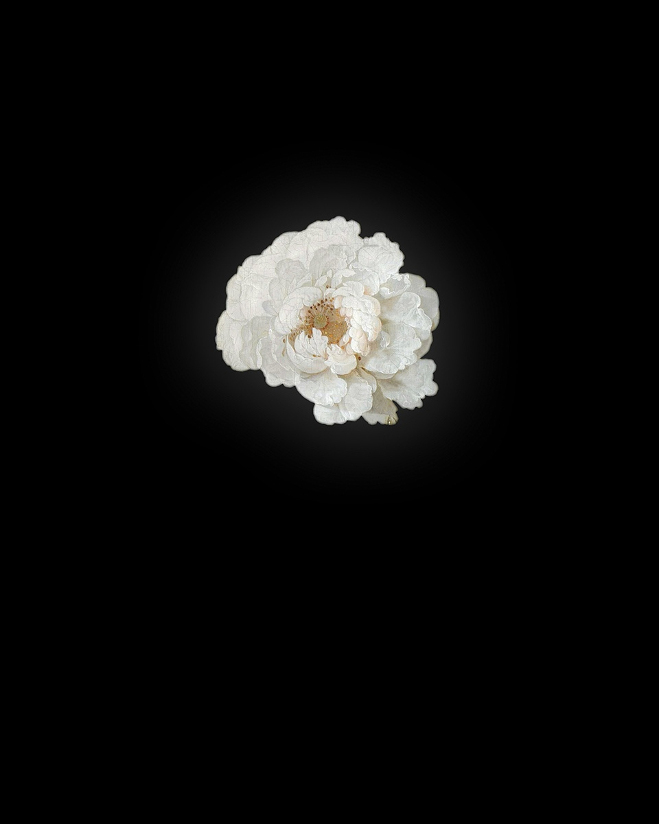 Rob and Nick Carter - RN942, Peony III after Abraham Mignon, 2013 · © Copyright 2018