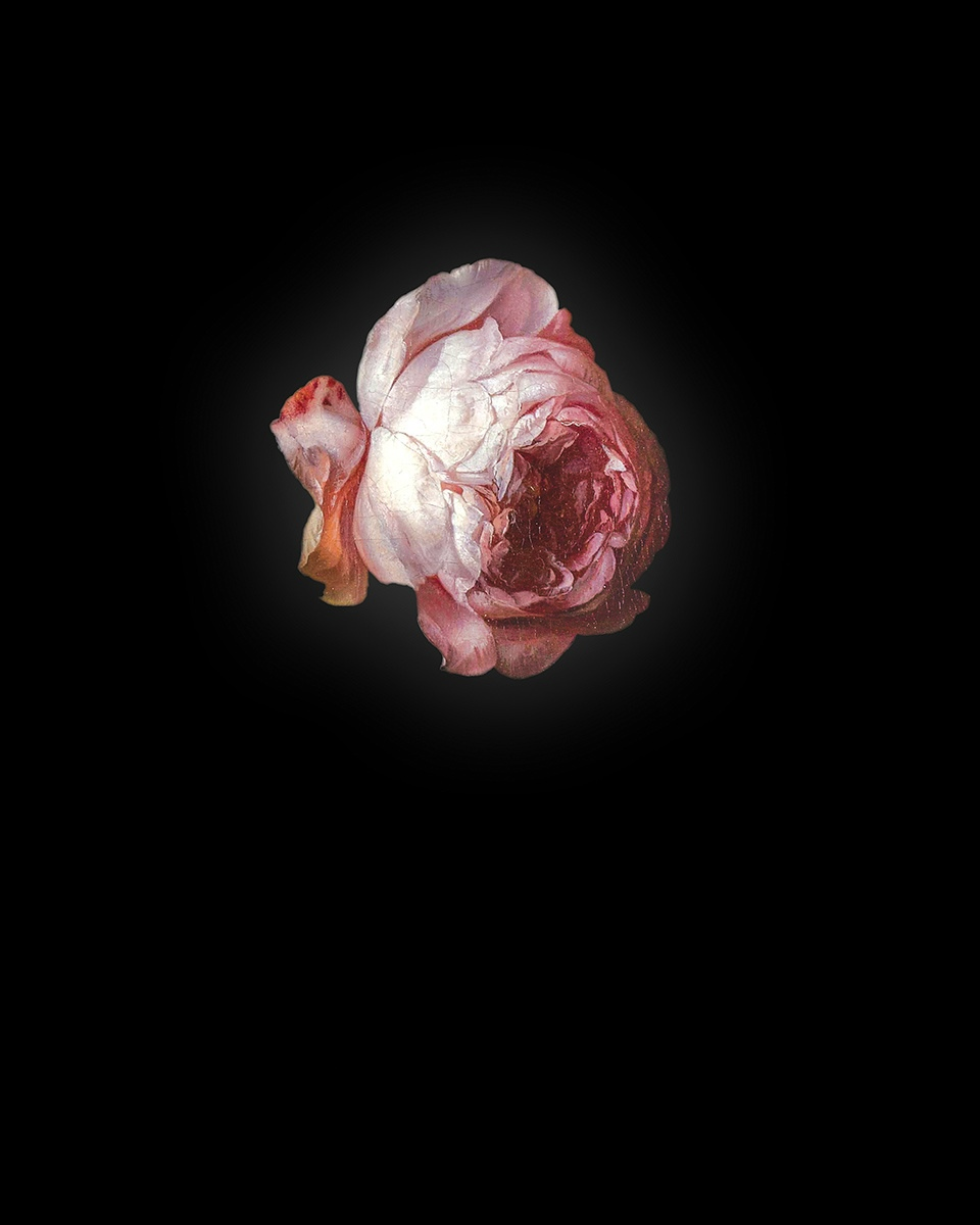 Rob and Nick Carter - RN940, Rose I after Rachel Ruysch, 2013 · © Copyright 2018