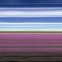 Rob and Nick Carter - TS117, Lavender Field II, East Yorkshire, England, 2003 · © Copyright 2021
